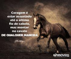 Resultado De Imagem Para Frases De Cavalos Cavalos Frases