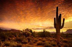 A Desert Sunrise