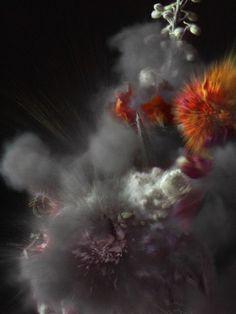 ori gersht photography photographer exploding flowers