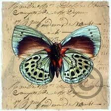 Resultado de imagen de laminas de mariposas