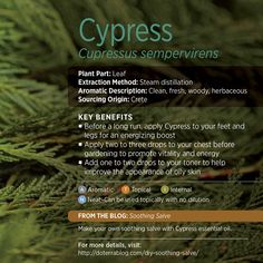 Cypress is a great essential oil! It's popularly used to clear breathing, as a throat gargle, and to ease tight, tense muscles - so it's great post-workout! But I also apply it sometimes before exercising and find it gives me a boost of energy as well.  www.hayleyhobson.com