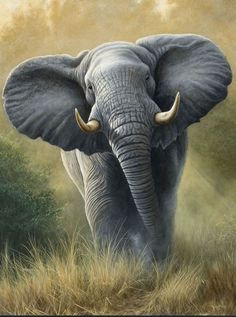 !!! <3 Absolutely STUNNINGLY BEAUTIFUL! This artist is amazing. This looks so real that it could be a photograph. I love, Love, LOVE Elephants. <3 !!!: Art Paintings Wildlife, Art Wildlife, Animals Kleurplaten, Art Elephants, Animals Elephants, Anim