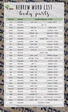 Hebrew Word List: Body Parts in Hebrew - The Kefar Biblical Hebrew, Hebrew Words, Learn Hebrew Alphabet, English To Hebrew, Bible In English, English Grammar, Hebrew School, Bible College, Root Words