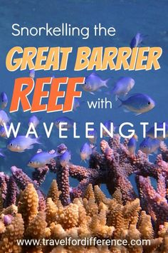 Kayak Australia My experience snorkelling the Great Barrier Reef with Wavelength Reef Cruises. Scuba Diving Gear, Cave Diving, Australia Travel, Queensland Australia, Cruise Reviews, Packing, Cozumel, Cancun, Tulum