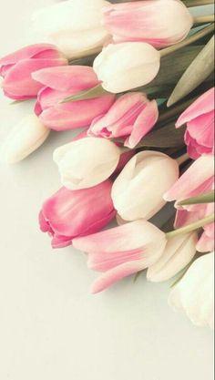 Tulipán fondo