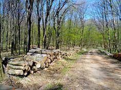 Spring in the forest - Tavasz az erdőben, Vérteskozma, Hungary - Ildikó Fehérváry - Google+