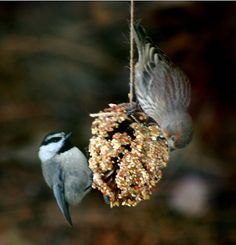 Birds need to be remembered during the winter as food becomes harder to find. This bird feeder will make them very happy! Warm your heart and feed the birds.