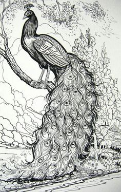 peacock - pinned from original pinner