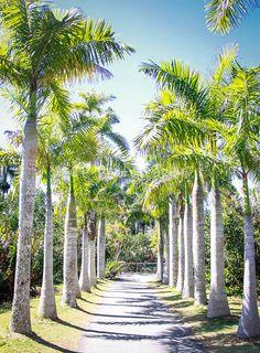 #Florida #Palms #Naples #Sunshine #bluesky #tropical