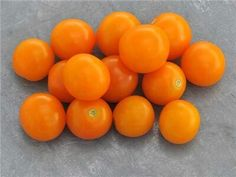 Tomato 'Sungold': f1 hybrid, mostly true from seed; very sweet.