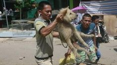 The tradition of the Yulin festival has been going on for years now and nothing has been done to prevent this. Thousands of d...