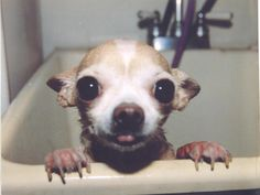 Adorable wet chi