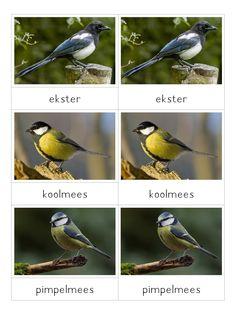 legwerkje vogels (in de winter)