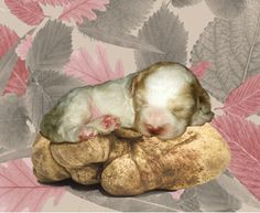 a Club of Truffles? Yes at the Monferrato's door. We show you this dog is dreaming what. www.italiansentimento.it