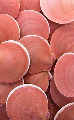 Shell, A Gift From the Sea coquillage coral living nuancier pantone 2019 Patterns In Nature, Textures Patterns, Organic Patterns, Print Patterns, Coral Color, Coral Pink, Colour Pop, Bright Pink, Pink White