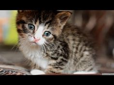 Cute Baby Animal Video Nikita Rescued Cat Cutest Kitten Ever | Global Animal