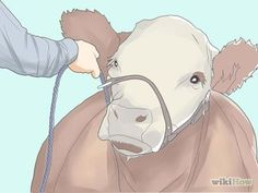 How to Read, Understand, and Use Expected Progeny Differences (EPDs) in Cattle
