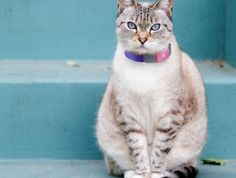 Tagg Pet Tracker Master Kit - Neat Shtuff | Neat Shtuff $100