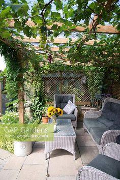 Grape Trellis, Grape Arbor, Trellis Panels, No Grass Backyard, Wooden Pergola, Dream Home Design, Raised Garden Beds, Outdoor Entertaining, Yard Ideas