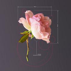 Plant-Geometry-Sharpe-2
