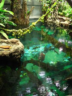 California Academy of Sciences, one of Tim Ferriss' many San Francisco recommendations on Trippy.com.