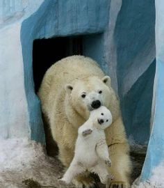 Very interesting post: Funny and Cute Animal Pictures - 28 Pics.сom lot of interesting things on Funny Animals. Cute Baby Animals, Animals And Pets, Funny Animals, Animals Photos, Photo Ours, Baby Polar Bears, Love Bear, Mundo Animal, Tier Fotos