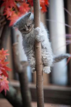 20130223-cat-tree.jpg 499×750 pixels