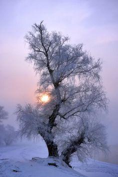 New nature winter snow sun ideas Winter Photography, Landscape Photography, Nature Photography, Photography Classes, Photography Poses, Winter Magic, Winter Snow, Winter White, Winter Pictures