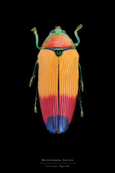 Stunning Pictures of Colourful Insects – Fubiz Media