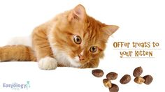 Offer Tasty Cat Treats! @easyologypets