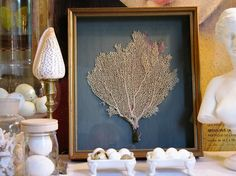 Sea Fan Shadow Box-to make with all those sea fans we brought back from the Bahamas