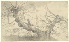 Study Of A Tree   Abraham Bloemaert