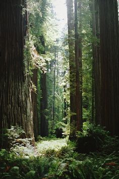 nature forest and tree image Beautiful World, Beautiful Places, Beautiful Forest, Beautiful Pictures, Landscape Photography, Nature Photography, Adventure Photography, Photography Ideas, Nature Sauvage