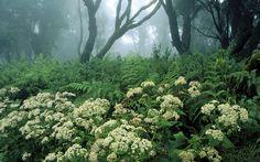 1920x1200 Wallpaper spain, wood, vegetation, trees, flowers
