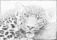 Dessins de loups colorier pinterest - Image leopard a imprimer ...
