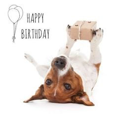 Looking for for inspiration for happy birthday friendship?Check this out for very best happy birthday inspiration.May the this special day bring you happy memories. Birthday Meme Dog, Best Birthday Quotes, Happy Birthday Wishes Quotes, Happy Birthday Greetings, Card Birthday, Birthday Ideas, Birthday Congratulations, Birthday Outfits, Sister Birthday
