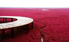 Beautiful of Panjin Red Beach in China. Beautiful Places In The World, Places Around The World, Most Beautiful, Amazing Places, Beautiful Flowers, Beautiful Pictures, Aliens, Red Beach, Strange Places