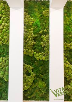 #MossWallideas Do you want to make people feel great? Relaxed? Happy? Place a #moss wall at your #office to reduce stress. Green color will refresh your workspace and create good vibes!