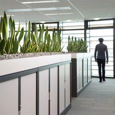 Open Plan Offices - indoor plants displays from Ambius: