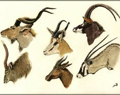 "African antelopes, Oryx, greater kudu, sable, nyala, springbok  tsessebe  5.5x8"" Art Print by Juan Bosco"