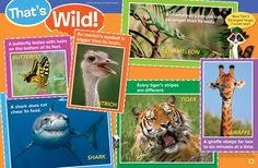 Ranger Rick Jr.'s That's Wild column is facing off for the PreK-2 Departments, Columns, and Sections crown.