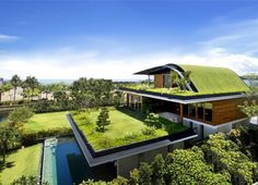 Green roofs: energy savers and great to look at! [I love this concept!]