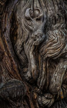 "musicofthedawn: "" coffeenuts: "" mererecorder:Wood Spirit by WTek79 "" ♣ ♧ beyond the edge ♤ ♠ """