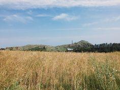 #southkorea #jejuisland #jeju #photosofnature #naturephotos #travel #travelnature #freedownload #heydayswithhanna #happyheydays Jeju Island, Nature Photos, South Korea, Sunny Days, Free Images, Fields, Travel, Viajes, Korea