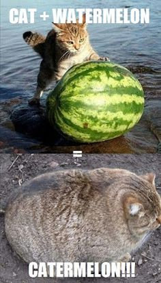 This cats gonna be crappin out watermelon slices...