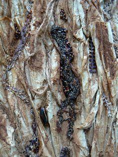 Detail Metamorphosis 6 by Karen CATTOIRE