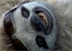 Sloth is too cool for you