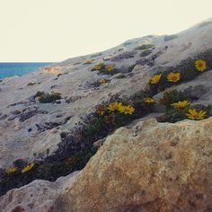 Flowers growing between stones. #timelapsing #timelapse #flowers #spain #spring #calblanque #mediterranean www.albertoexposito.net Time Lapse Photography, Stones, World, Spring, Water, Photos, Travel, Outdoor, Landscapes