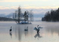 Swans, Mountains, Nature, Travel, Naturaleza, Viajes, Destinations, Traveling, Trips