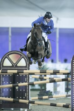 Location: Al Shaqab, Doha, Qatar  Subject: Two-time Olympic silver medalists Gerco Schroder and his amazing stallion London win the 2012 Doha CSI5* Grand Prix, taking home €215,000